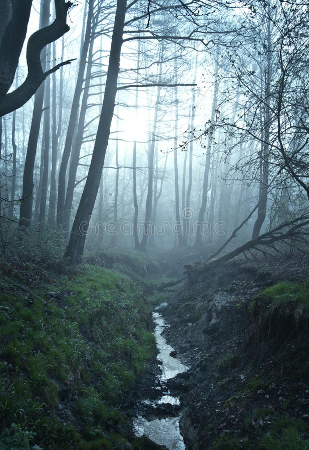 Fine art fantasy color outdoor nature image of a small river / creek in a foggy winter forest with rocks,undergrowth,bridg stock photography