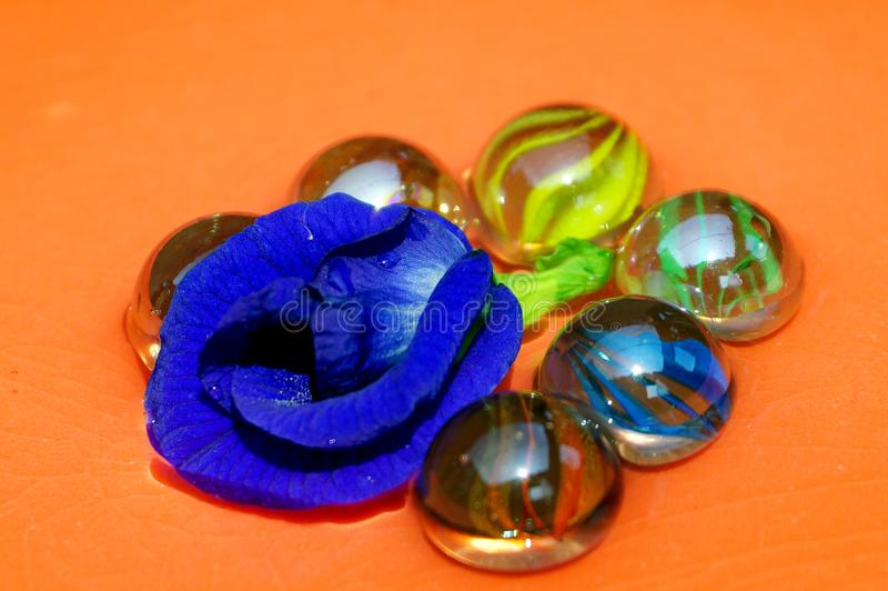 The fine art of glass marble balls and purple color Butterfly Pea royalty free stock photo