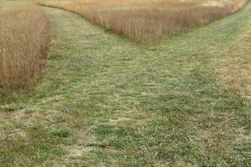 Fine attraversata di via dell'erba su immagine stock