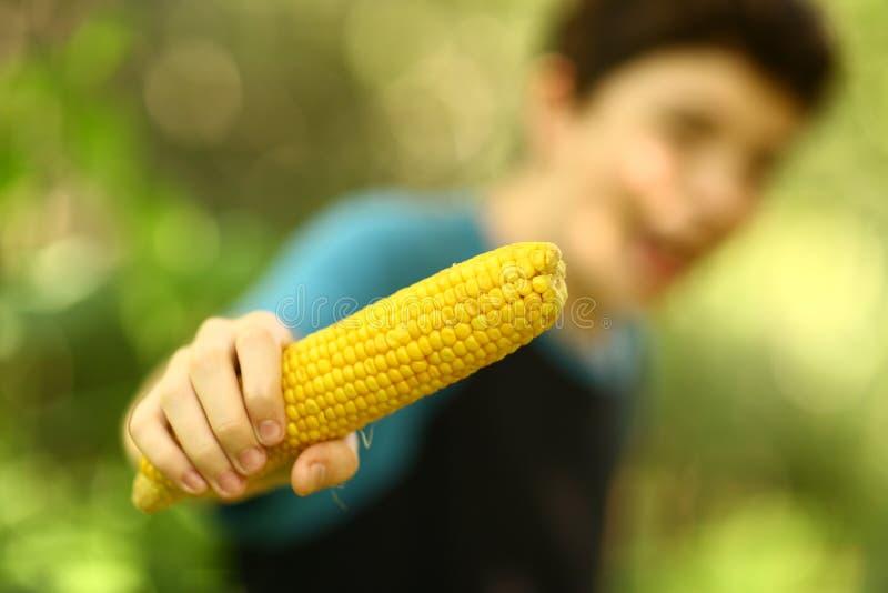 Fine bollita mangiare della pannocchia di granturco del ragazzo dell'adolescente sulla foto fotografia stock libera da diritti