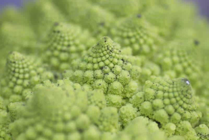 Fine del broccolo di Romanesco in su fotografia stock libera da diritti