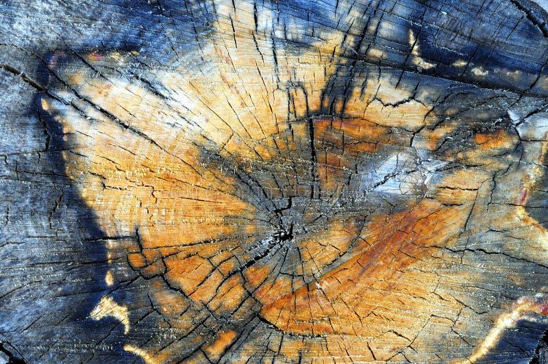 Fine del ceppo di albero dell'Aspen in su fotografia stock libera da diritti