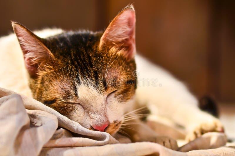 Fine del fronte del gatto di sonno su immagini stock libere da diritti