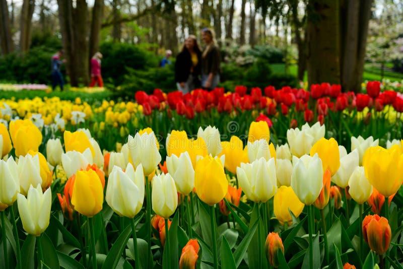 Fine del giacimento di fiori di Multicolours su in Olanda, fiori di tempo di molla in Keukenhof fotografie stock libere da diritti