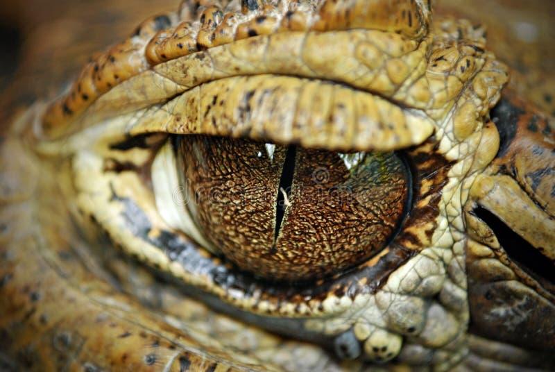 Fine del particolare degli occhi del coccodrillo in su fotografie stock libere da diritti