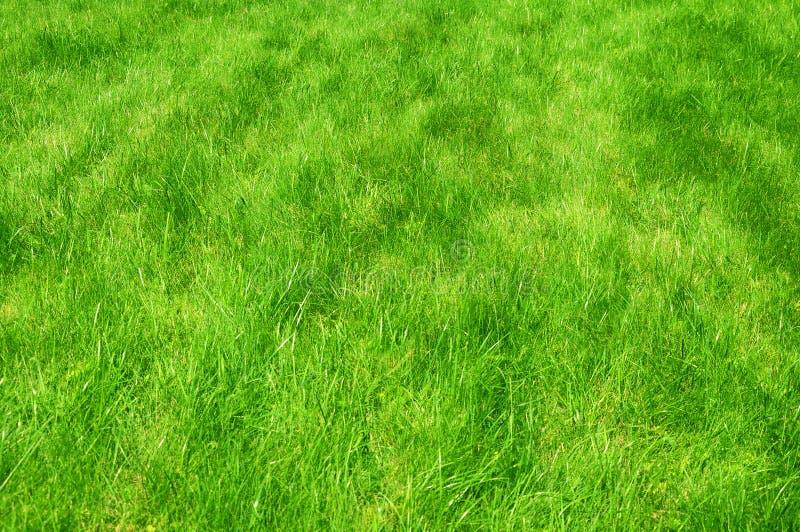 Fine del prato inglese manicured verde fresco su Fondo tagliato dell'erba verde Fondo verde del prato inglese immagini stock