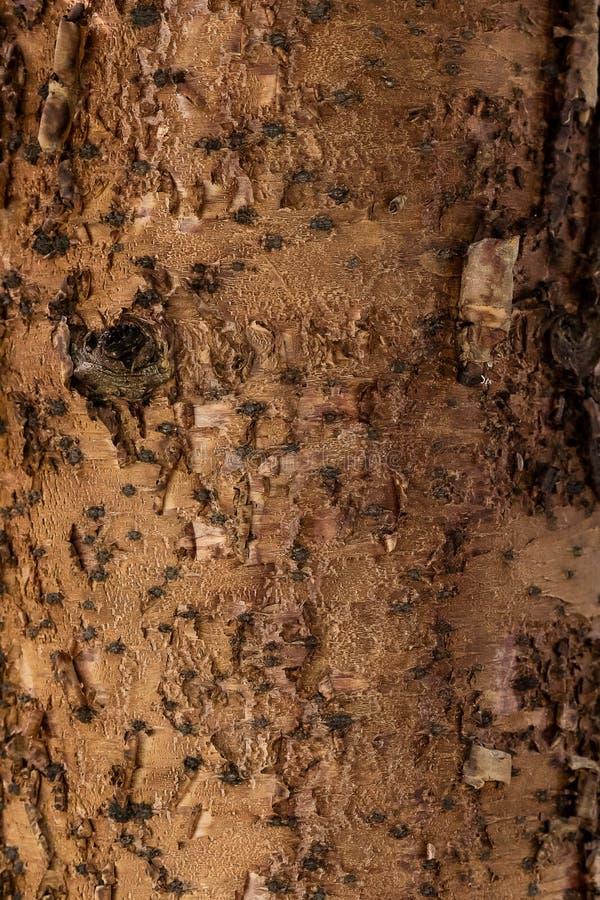 Fine del tronco di albero su, struttura della corteccia immagini stock libere da diritti