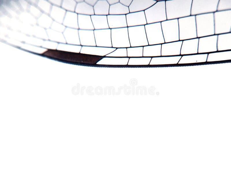 Fine dell'ala della libellula su fondo con grata trasparente zumata immagini stock