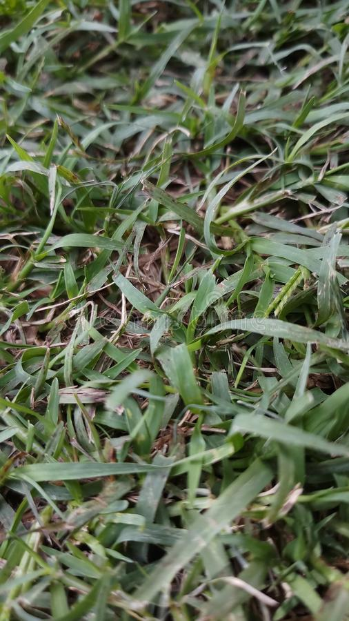 Fine dell'erba verde sullo sguardo sguardo abbastanza stupefacente e bello fotografia stock