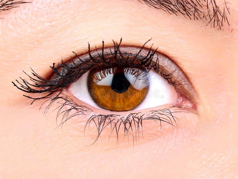 Fine dell'occhio di marrone della donna su fotografia stock libera da diritti