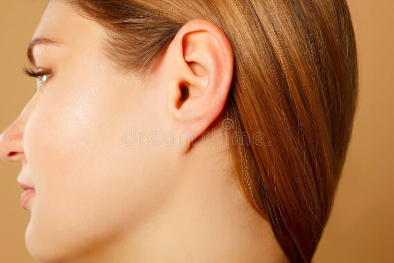 Fine dell'orecchio del ` s della donna su, concetto di anatomia immagini stock