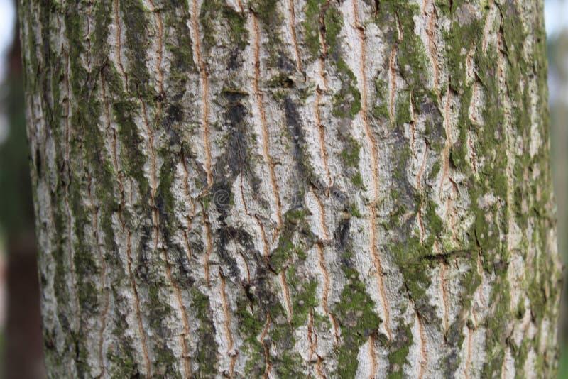 Fine della corteccia di albero su immagine stock