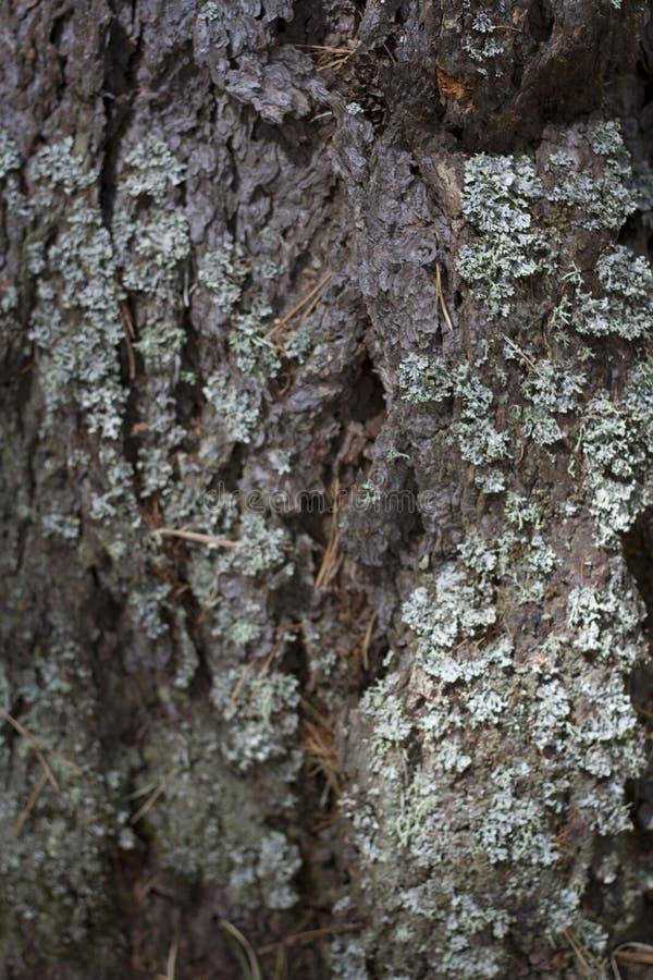 Fine della corteccia di albero su soleggiato immagini stock