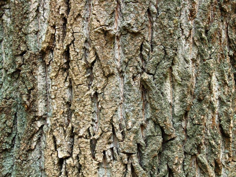 Fine della corteccia di albero su struttura fotografia stock
