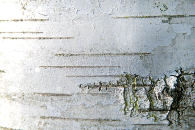 Fine della corteccia di betulla in su immagini stock libere da diritti