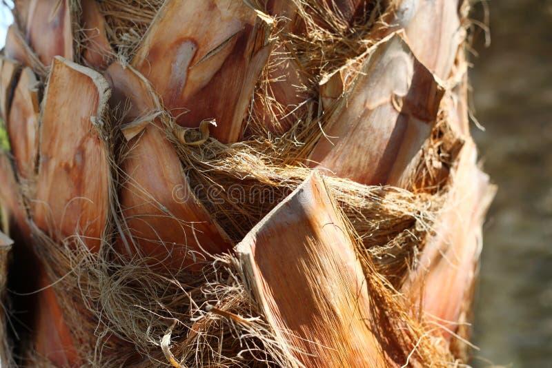 Fine della corteccia della palma su immagini stock