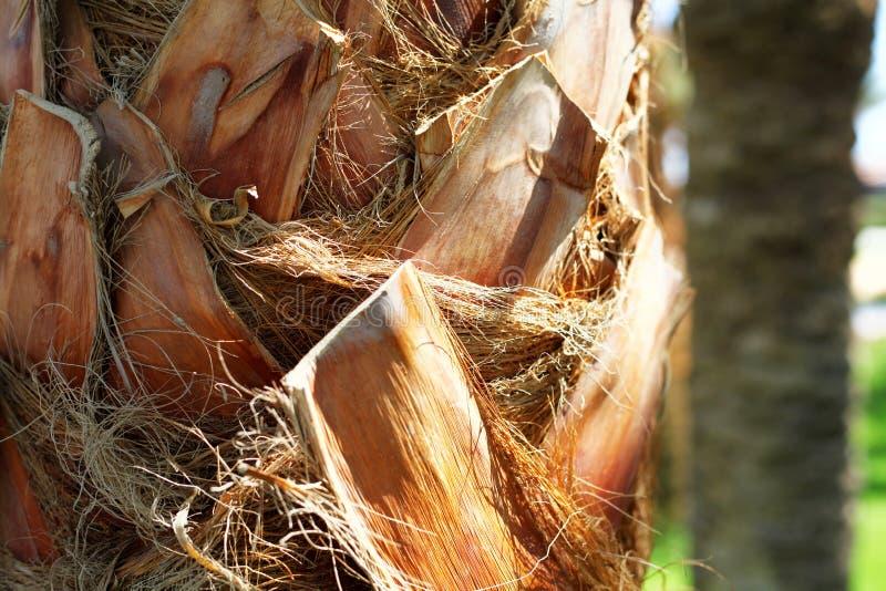 Fine della corteccia della palma su immagini stock libere da diritti