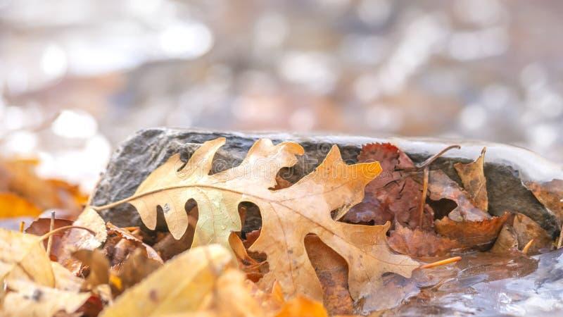 Fine della struttura di panorama su delle foglie marroni cadute su un terreno roccioso coperto di acqua congelata immagine stock libera da diritti