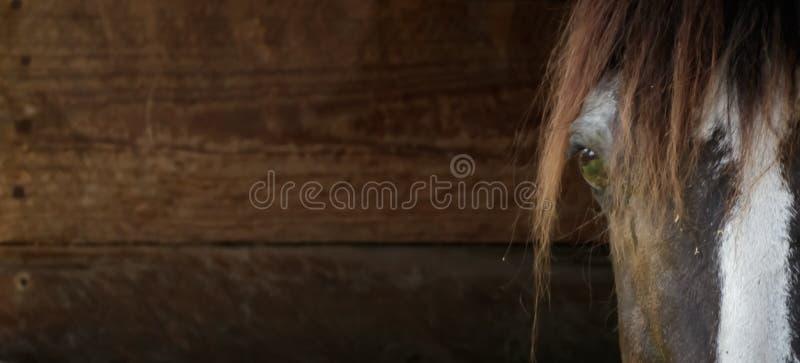 Fine della testa di cavallo su fondo di legno fotografia stock libera da diritti