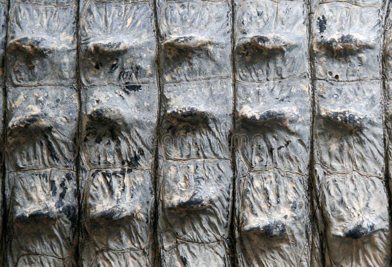 Fine di Aligator in su fotografia stock libera da diritti