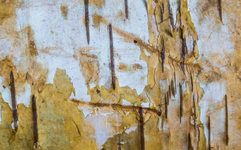 Fine di legno stagionata di macro del ceppo dell'albero di betulla sullo sfondo naturale di struttura immagini stock