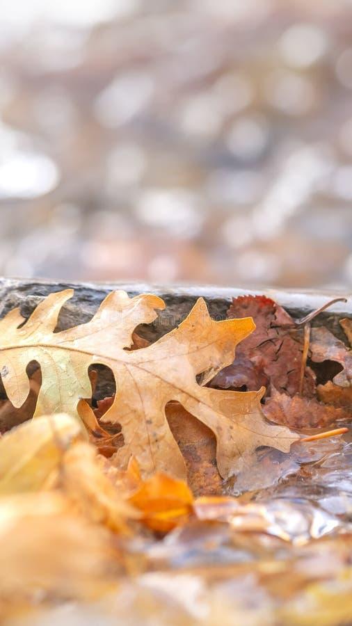 Fine di panorama su delle foglie marroni cadute su un terreno roccioso coperto di acqua congelata immagine stock libera da diritti