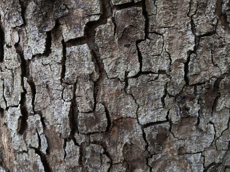 Fine di struttura dell'albero di corteccia su immagini stock