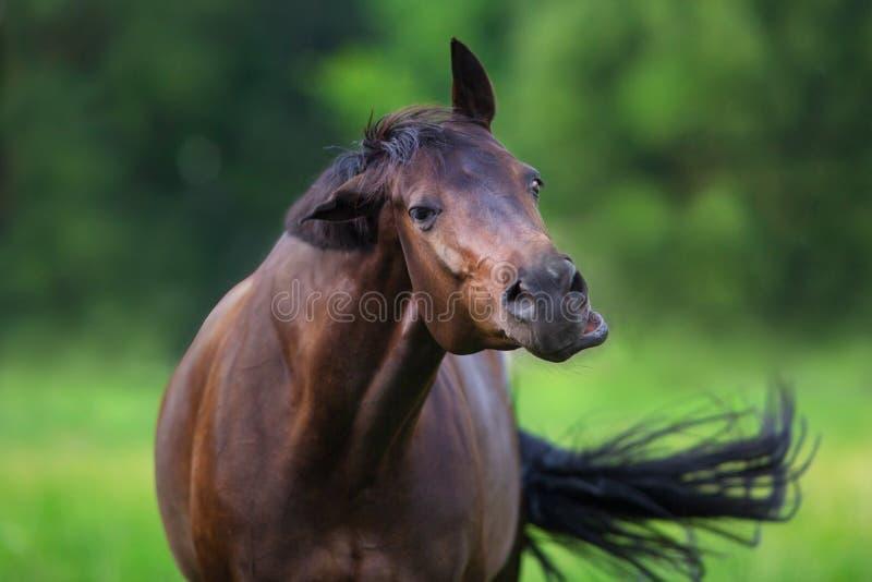 Fine divertente del cavallo su fotografia stock libera da diritti