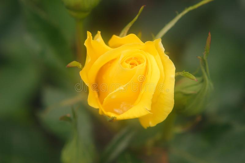 Fine flower in foggy shape royalty free stock photo