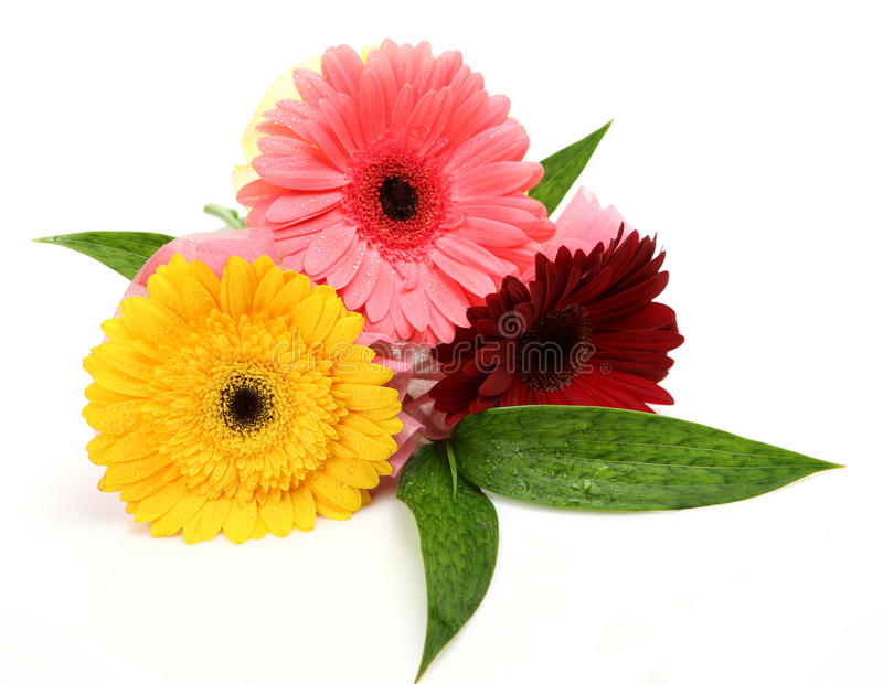 Download Fine Flowers Royalty Free Stock Photos - Image: 17610648