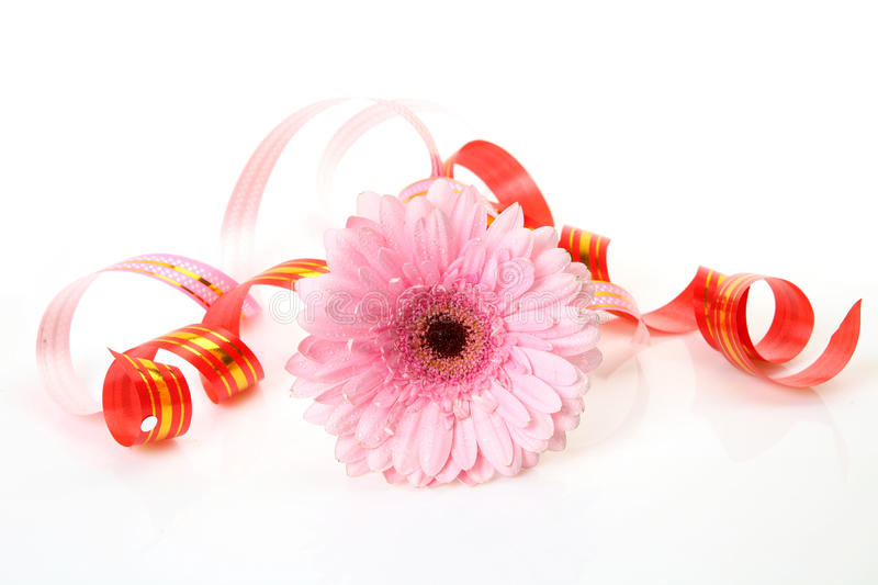 Fine Flowers Stock Images