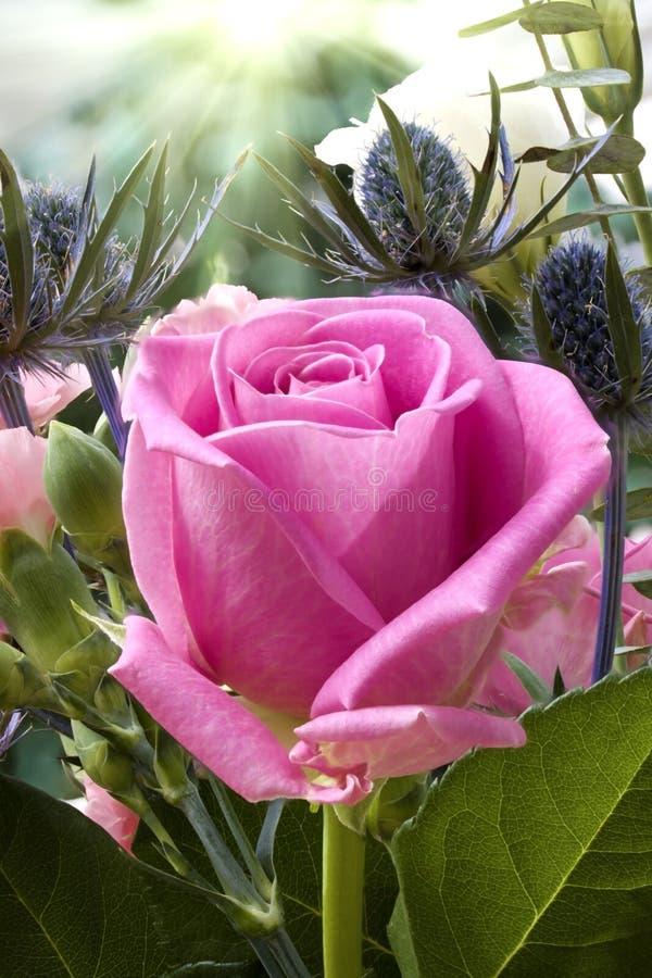 Fine inglese della rosa di colore rosa in su in giardino for Rosa inglese