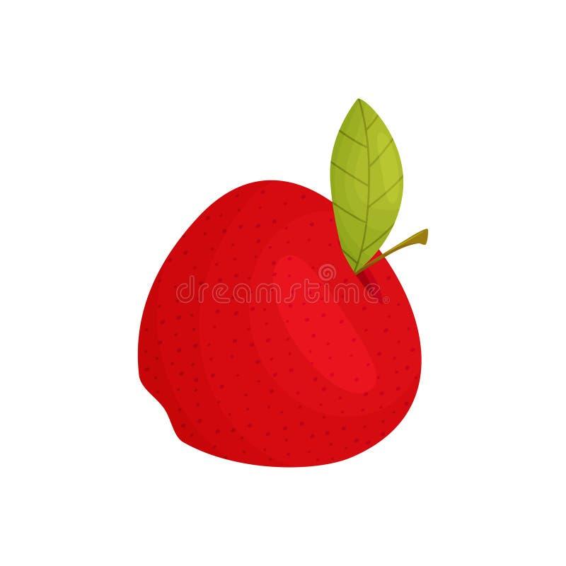 Fine matura rossa della mela su Illustrazione di vettore su priorit? bassa bianca illustrazione di stock