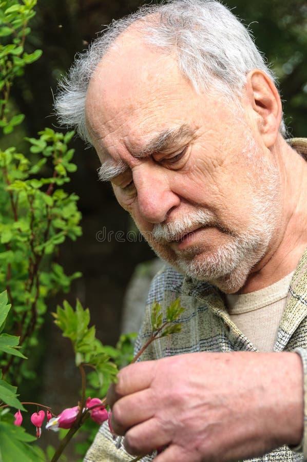 Fine senior del ritratto del giardiniere su immagine stock