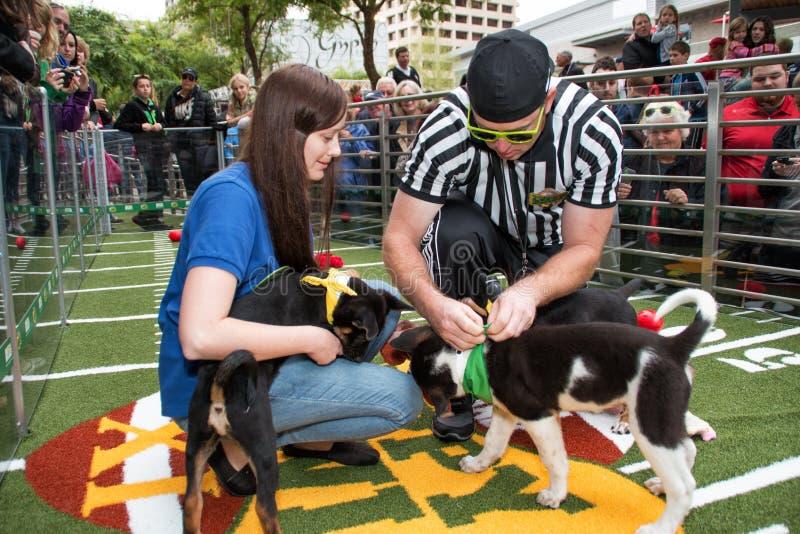 Fine settimana animale di Super Bowl della ciotola del cucciolo del pianeta fotografia stock libera da diritti