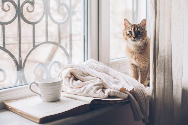 Fine settimana di inverno con il gatto a casa immagine stock libera da diritti