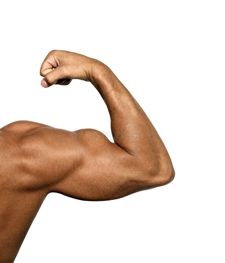 Fine su del braccio del ` s dell'uomo che mostra il bicipite immagini stock