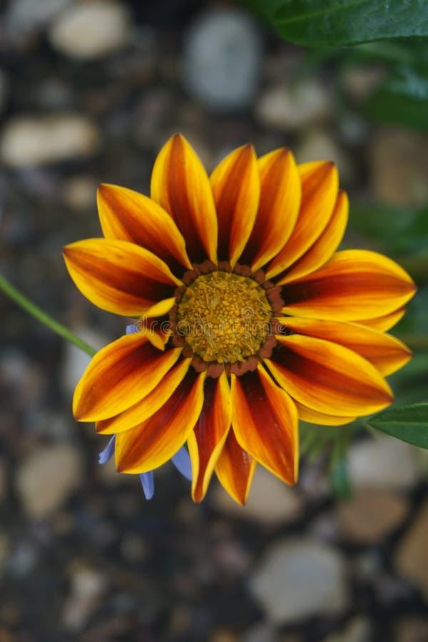 Fine in su di un fiore fotografia stock