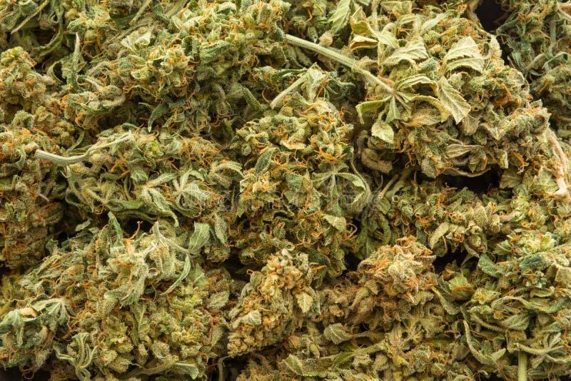 Fine su fondo strutturato dei germogli medici della cannabis fotografia stock