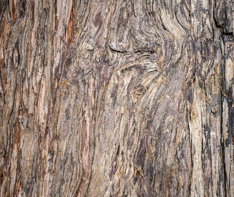 Fine su legno marrone originale dal fondo e dalla struttura dell'albero fotografia stock