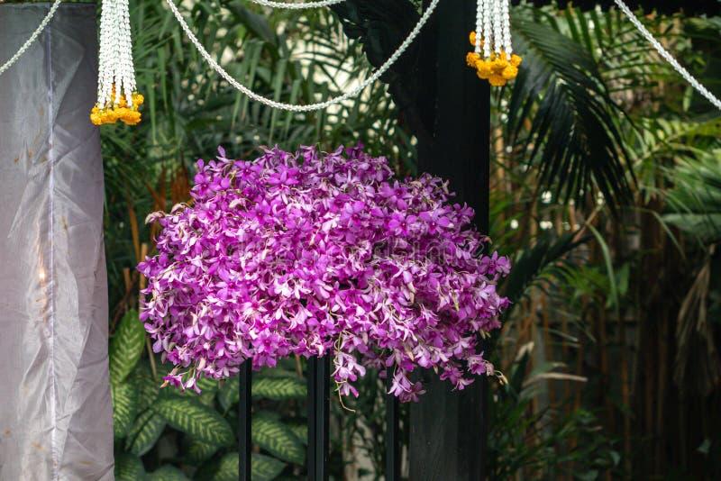 Fine sugli ibridi dell'orchidea del Dendrobium nel giardino Bella orchidea porpora del fuoco selettivo immagini stock libere da diritti