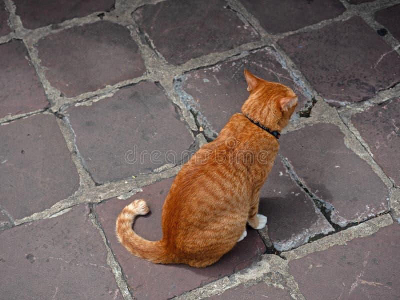 Fine sul gatto di soriano arancio che si siede da solo sul pavimento fotografie stock