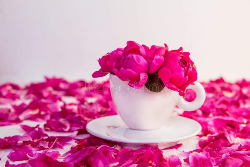 Fine sul mazzo rosa porpora dei fiori della peonia in una tazza ed in un piattino decorativi su fondo bianco con i petali delle p immagini stock