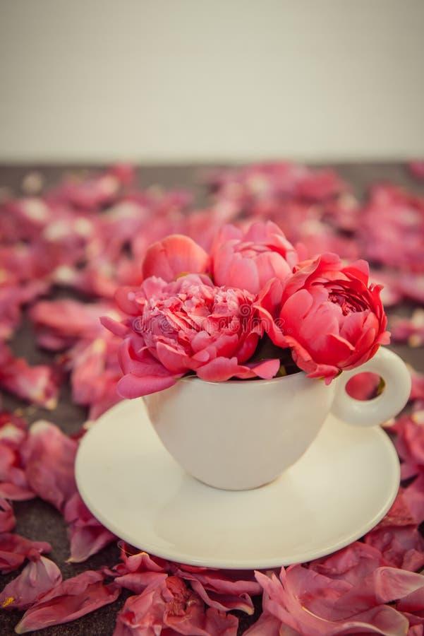 Fine sul mazzo rosso porpora dei fiori della peonia in una tazza ed in un piattino decorativi su fondo scuro con i petali delle p fotografia stock