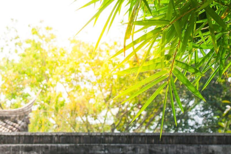 Fine sulle foglie di bambù verdi al parco pubblico con luce solare nei precedenti immagini stock libere da diritti