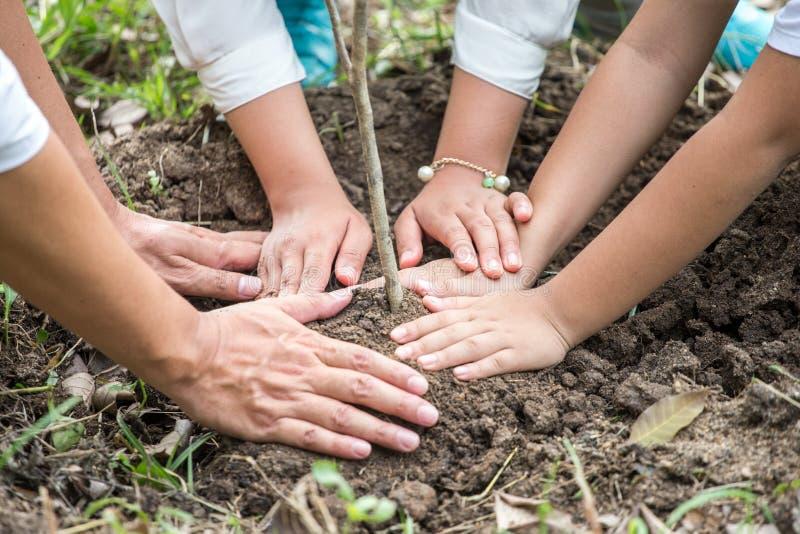 fine sulle mani della famiglia asiatica felice, dei genitori e del loro albero dell'alberello della pianta dei bambini insieme in immagine stock libera da diritti