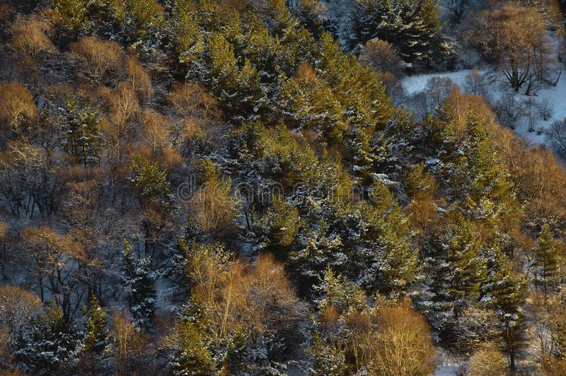 Fine-textured background of an autumn forest pattern in yellow tones with snow elements view from above. royalty free stock photos