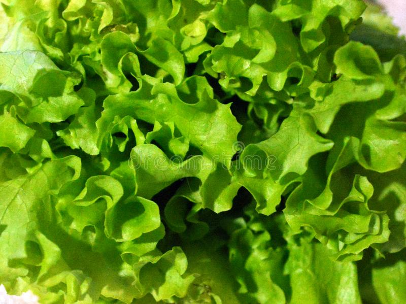 Fine verde della lattuga di foglia su, bello fondo floreale fotografia stock libera da diritti