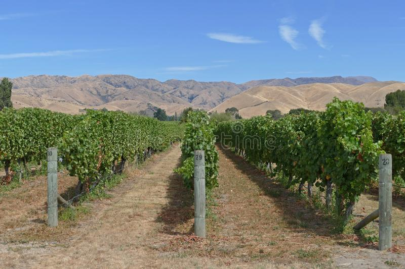 Fine wines from a vineyard in New Zealand stock images