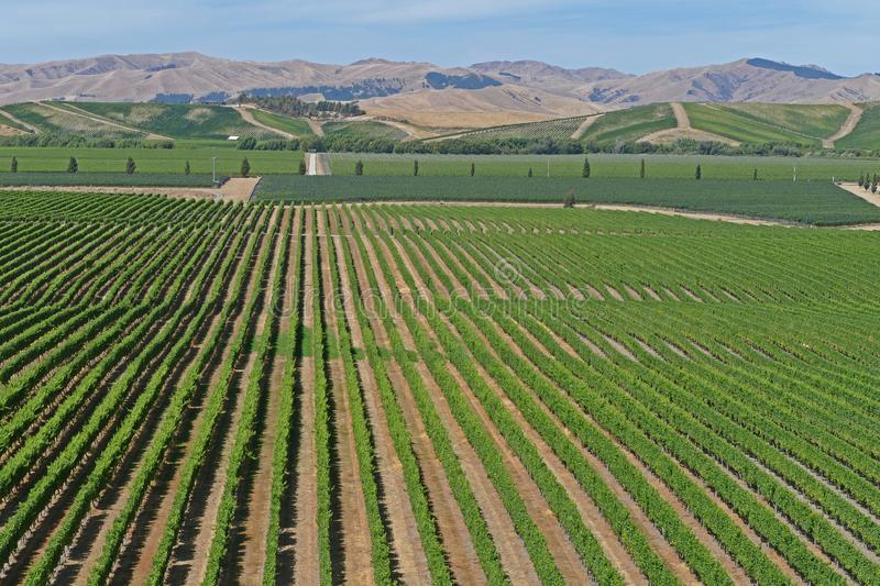 Fine wines from a vineyard in New Zealand stock image